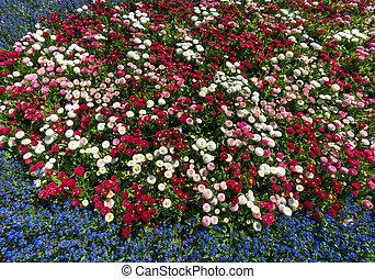 Flowerbed - Buntes Blumenbeet im Frhling mit weiss rosa...