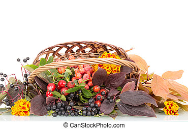 Autumn berries, flowers and leaves in basket isolated on...