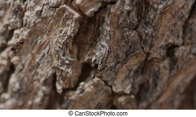 Tree bark with ants colony