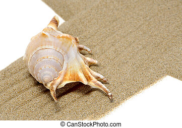 seashell - a big spired seashell on the sand