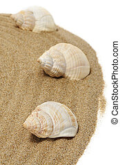 seashells - a pile of spired seashells on the sand