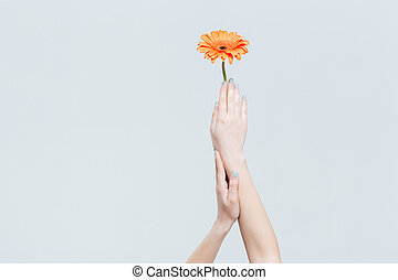 Female hands holding flower isolated on a white background