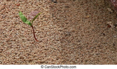 Young green sprout growing in sandy