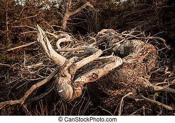 gnarly branches - The ugly gnarly branches on a tree