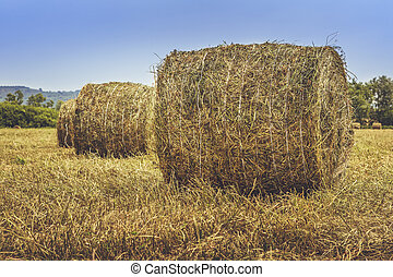 Straw bales on the field - Dry hay and straw bales in the...