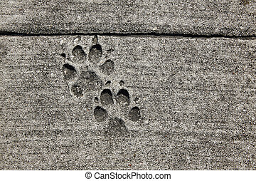 dog footprints printed in sidewalk concrete cement