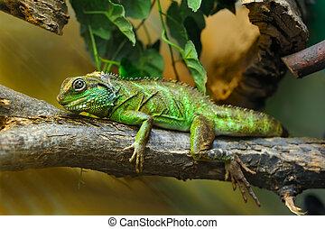 Lizard on branch - Little lizard on the branch