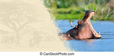 Hippo on textured paper Animal on a background of old paper