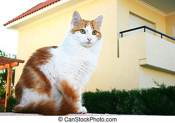 pared, gato