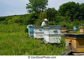 Beekeepers on apiary 1 - Two beekeepers work on an apiary...