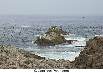 Seabirds off the Coast of Chile - Thousands of seabirds of...