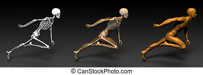 3D Concept of Human Male Body and Skeleton Art