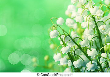 lily-of-the-valley flowers over green natural backgrounds...