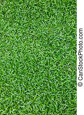 green grass turf in garden, natural eco background