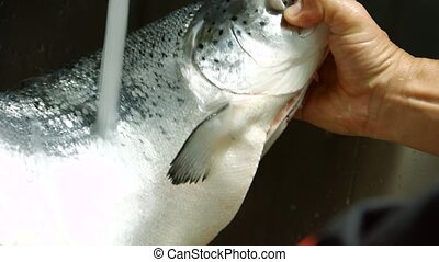 Male hands holding a fish. Water flowing onto raw fish. What...