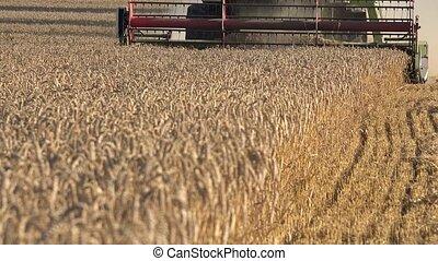 seasonal rye harvesting work in rural farm at end of summer. 4K