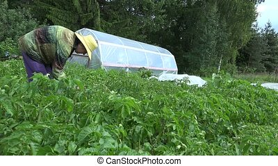 Organic rural farming. Gardener woman pick parasite animals...