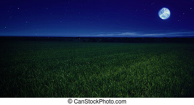 moonlit night in wheat field