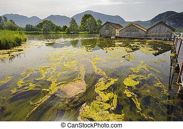 algae in lake - algal bloom in lake in Bavaria