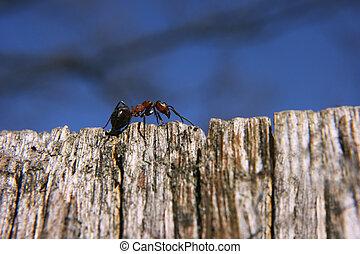 蟻, 世界, 上