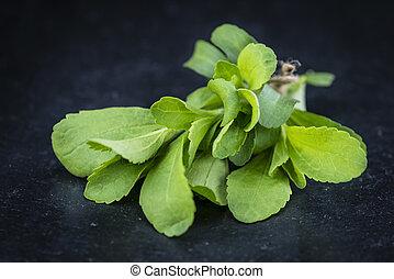 Stevia, hojas,