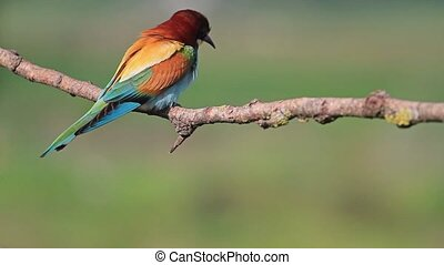 bright bird sits on a branch,beautiful colors