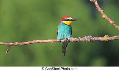 colored bird on a branch,bird of paradise, iridescent...