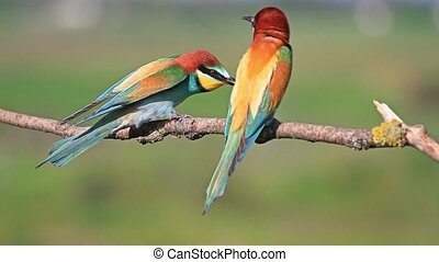 life colored birds,beautiful picture with colorful birds...