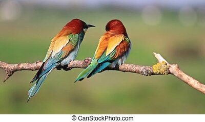 Two colored bird sitting on a branch,beautiful picture with...