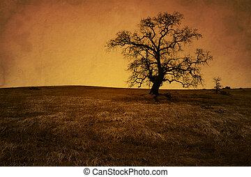 Antique Grunge Bare Oak Tree - Silhouette of bare oak tree...
