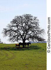 Bare Oak Tree and Horses in Springtime