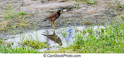Reflection of a bird in the puddle - The bird stands on the...
