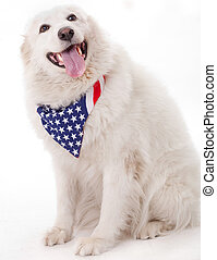 Cute dog wearing american flag scarf on the neck