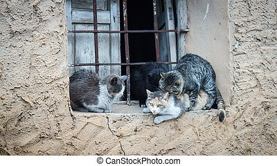 Domestic cats in the act of mating - Window with domestic...