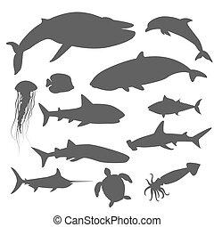 Marine Fauna Set of Aquatic Animals - Marine fauna set of...