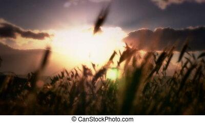 sunset grass 4k