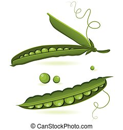 pea pods of green peas isolated vector illustration
