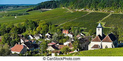 Champagne vineyards in the Cote des Bar Aube - Champagne...