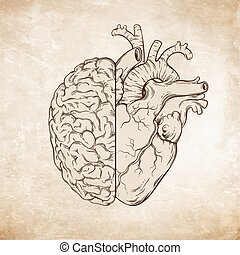 Hand drawn human brain and heart - Hand drawn line art human...