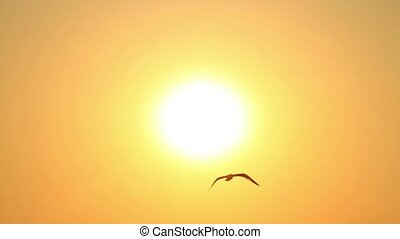 Seagulls flying into sky toward sun - Summertime, Slow...