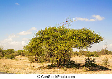 Trees near Namanga border between Tanzania and Kenya -...