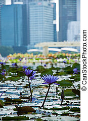 Scenic view of flowers like water lily and the business district, Singapore city