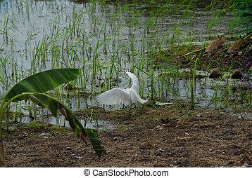 bird - white bird