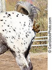 A spotted horse makes horse dung. - A spotted horse makes...