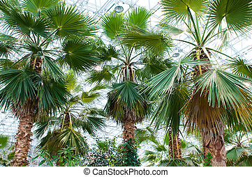 Many palms in the conservatory