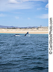 Marine Life on a Whale Watching Tour in Mexico
