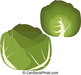 Collection of cabbage, vector