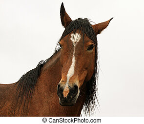 Attractive wild horse - Beautiful wild horse in the Black...