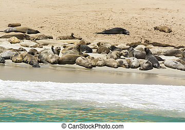Colony of seal lions - A colony of sea lions sun bathing on...
