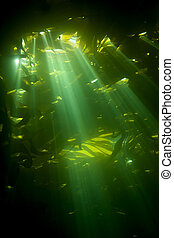 Sunrays piercing kelp - Sunrays pierce the canopy of kelp,...